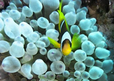 clown-fish-1268677
