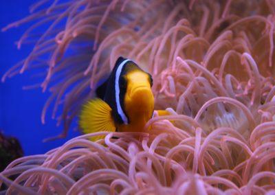 clown-fish-2199907