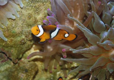 clown-fish-931121